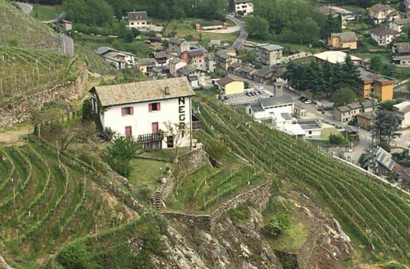 wineyard_view